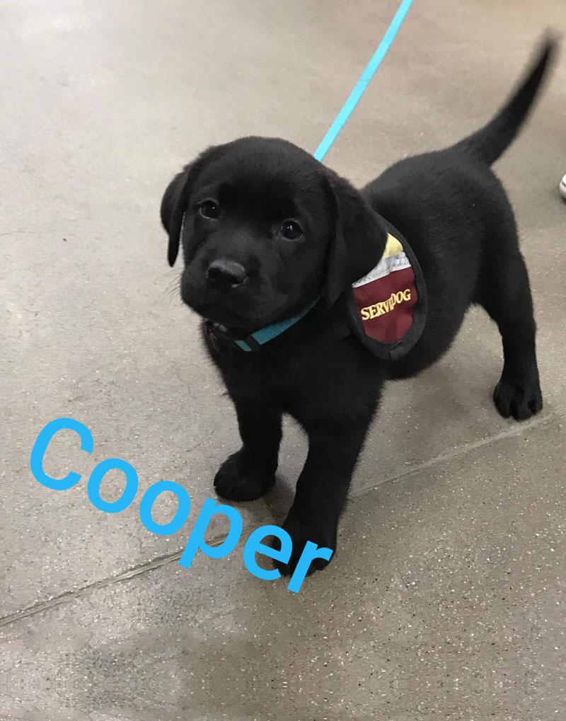 Aspen Dogs Service